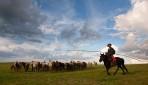 モンゴル草原乗馬と野生タヒ観察5日間
