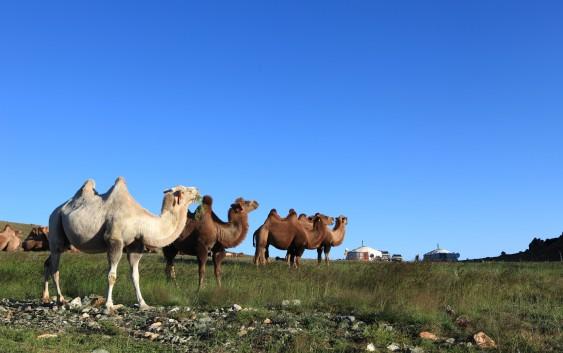 古都カラコルム遺跡やホームステイやモンゴルを列車と車で旅する8日間