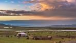 モンゴルの大地を馬で駆ける草原乗馬や遊牧民訪問6日間