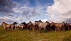 テレルジ国立公園と草原乗馬4日間
